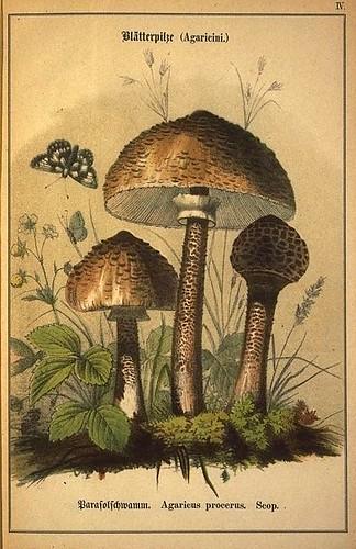 014-Allgemein verbreitete eßbare und schädliche Pilze 1876- Wilhelm von Ahles