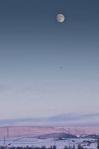 Moon, Bird, Snow