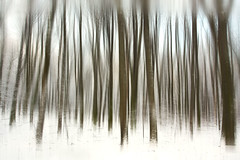 Winter shades (Geoffrey Gilson) Tags: trees winter white snow motion shift pan geoffrey dreamcatcher gilson canoneos7d wwwgeoffreygilsonnet