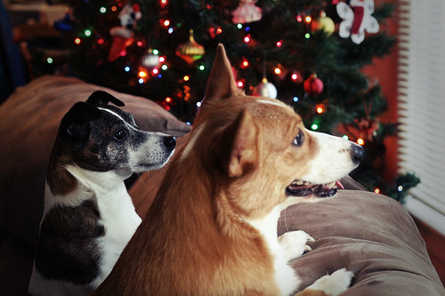 Christmas dogs + a little bit of bokeh