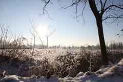 (andrea.prave) Tags: schnee winter parco snow cold ticino farm milano hiver nieve country campagna neve invierno neige provincia kalt inverno fro   freddo froid wwf bosco     arluno vanzago     agricolo mantegazza rogorotto pravettoni andreapravettoni fameta andreaprave