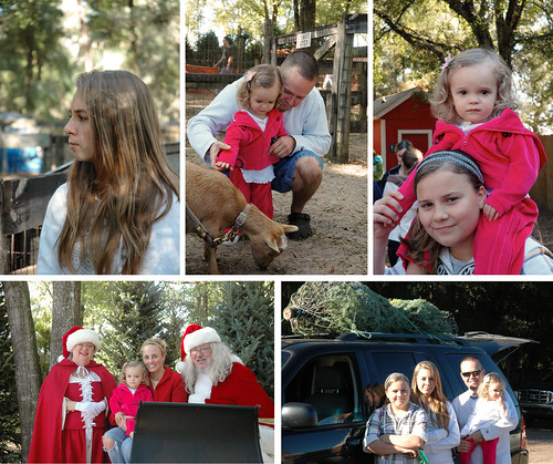 christmastreefarmcollage2010