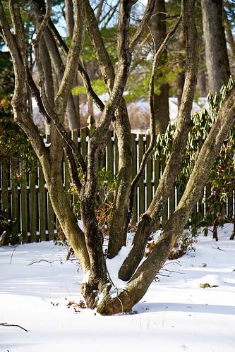 Tree in backyard