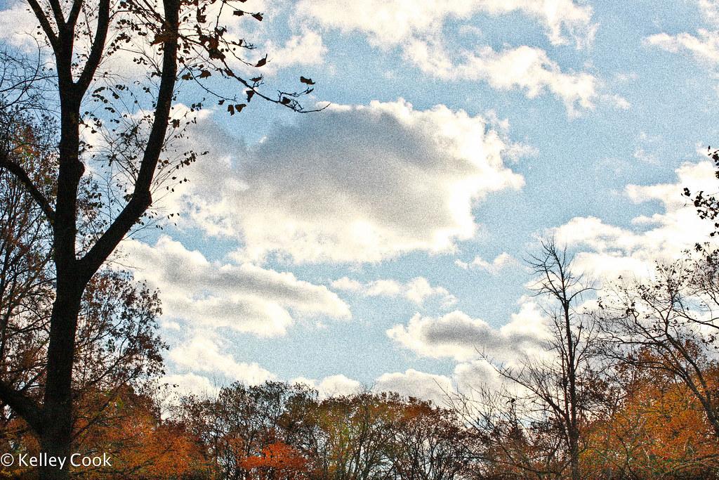 Central Park-5273.jpg