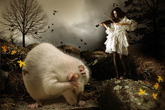 Ruhe, bitte.......... (Ronny Welscher) Tags: autumn photoshop dark ratte composing gothik violine geige dster cs5 wdesign fotodesignwelscher