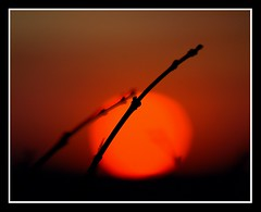 The sun will rise again in Japan..... (Levels Nature) Tags: uk morning light red england sun colour love nature silhouette dedication japan sunrise march earthquake branch glow dream silhouettes tsunami dorset twig dorchester frampton 2011 saariysqualitypictures