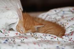 IMG_1865 (jack:)) Tags: cats cute animals cat kitten chat sweet lovely belli gatto gatti animali dolci gattino gatta gattini bellissimi teneri puffolosi tenerotti