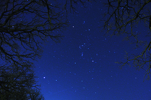Orion Floating in the Trees