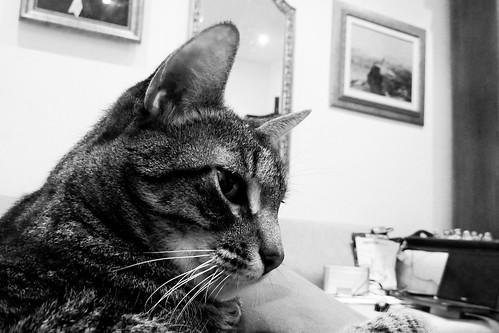 O gato. E mais nada.