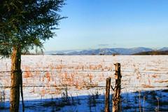 The Snowy Fields (☩ D L Ennis) Tags: snow mountains grass fence virginia fields backroad blueridgemountains cedartree amherstcounty dlennis thesnowyfields