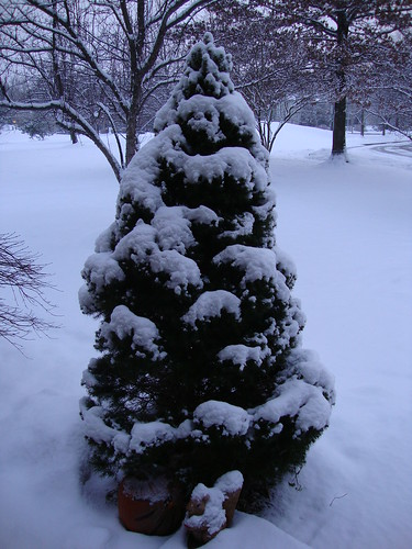 snow!  1/8/11