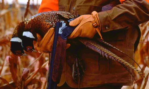 Greystone Pheasant