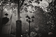 Kasuali   Where time stops (itshodgepodge) Tags: trees sun sunlight monochrome fog forest blackwhite gate earlymorning lamppost chilly rays bnw winters himachalpradesh kasuali