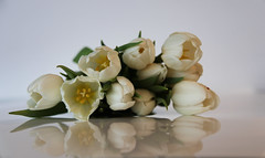 White tulips (rick ligthelm) Tags: white flower fleur tulip bulbflowers whitetulips