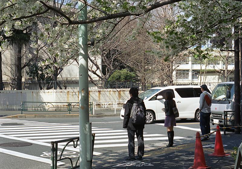 原宿桜2009