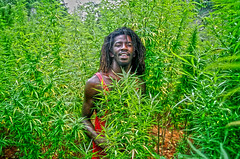 Jamaican in Marijuana Field (Greg Weeks Photography) Tags: africa red green grass gold j leaf gangster bush weed jay dragon colombian smoke nine ace pipe puff bob 420 boom seeds pot jamaica spliff fatty acapulco giggle shake birthplace bud dope marijuana zig bong marley roach jamaican skunk rasta blunt homegrown herb zigzag kaya maryjane joint mile chronic reefer auntmary hemp zag hooch ganja cheeba toke indica sinsemilla kif rastaman afgani cannibas sinse