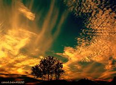 DSCF0022-1 (coral.hen4800) Tags: blue trees red sky sun black tree green yellow clouds sunrise gold golden gray sunrays senset saariysqualitypictures mindigtopponalwaysontop mygearandmepremium