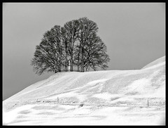 SUISSE WINTER (LitterART) Tags: trees winter tree schweiz suisse arbres bume arbre baum marterl bildstock lonesometree