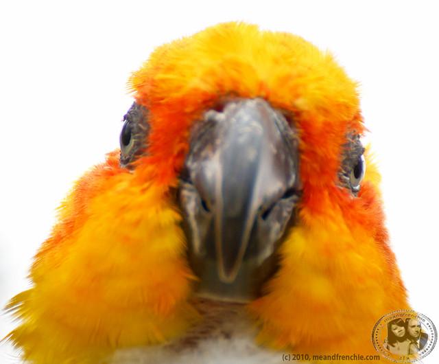 Parrot Face