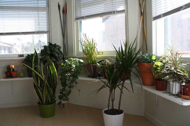 more! plants!