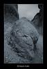 The Rock II (HASAN_ADEL) Tags: bw mountain rock canon landscape saudi arabia 450 ahsa ksa alhasa alhassa السعودية أبيض العربية طبيعة جبل المملكة صخور وأسود 450d تكوينات كانون الأحساء الصخرة الحسا القارة alqarah صخرية