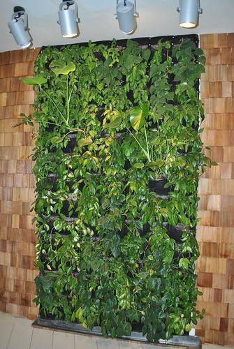Интересное решение с растениями в Яндексе