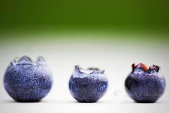 blueberry row (ggcphoto) Tags: macromondays fresness sweet macro fruit summerfruit blueberry