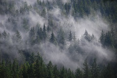 cloud forest on Vancouver island (xtremepeaks) Tags: forest fog clouds gold river bc canada vanisle rainforest west coast nature landscape autumn explore