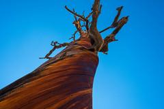 Twisted (Dave Chiu) Tags: brycecanyon nationalpark utah