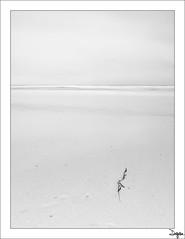 Excentricidad (diegogm.es) Tags: bw byn blancoynegro asturias playa gozon olympus minimalismo zuiko xago cantabrico 1442 e520
