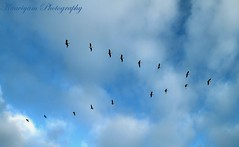 ...         ... ( Kaaviyam Photography) Tags: sky art me birds clouds photography fly with feathers som