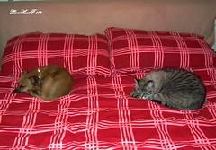 DSCF2008 (LionHearT-972 ( I'm very busy )) Tags: dog cane cat fuji gatto hs10