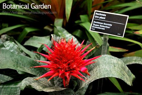botanical-garden-(42)
