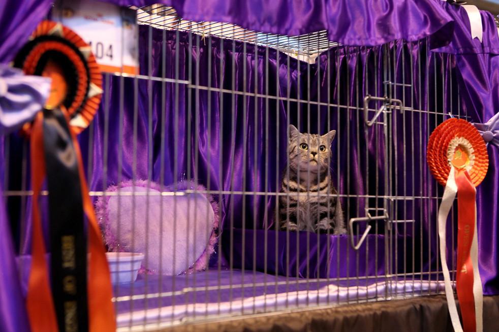 712 Выставка кошек в Англии