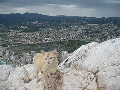 IMG_7667 (currenfrasch) Tags: cat europe gato penondeifach penyaldifach calpespain canonpowershota1000is