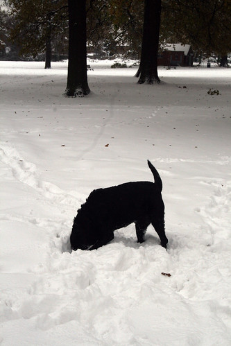Snow-Nov_10_15