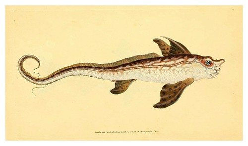 020-The natural history of British fishes 1802-Edward Donovan