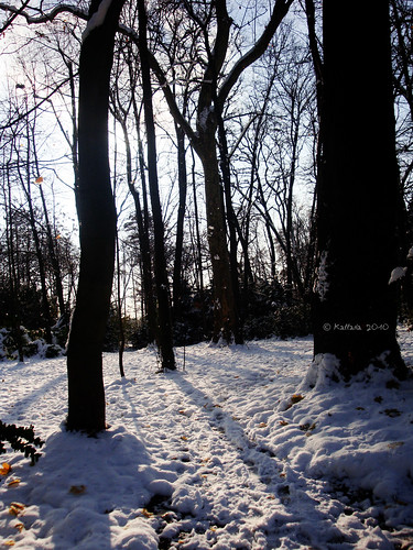 Snow trees and sun