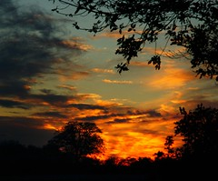 17 sunsets before Christmas (algo) Tags: trees sunset red england sky orange sun clouds interestingness topf50 searchthebest silhouettes topv222 explore fields algo thechilterns chilternhills 50f explore320 rubyphotographer