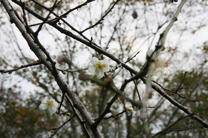 槭林公園006