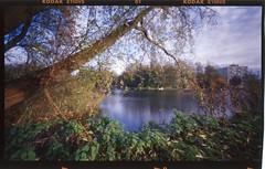 . (gelelie / Gerda) Tags: autumn nature project landscape rotterdam pinhole expired kodake100vs 100asa 2010 kralingsebos kralingseplas diycolor pinholecolor holgawpc