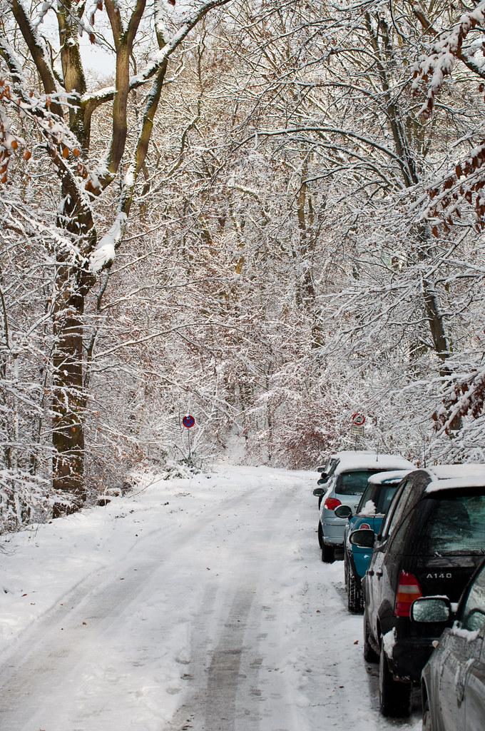 Winter unter den Eichen am 9.12.2010