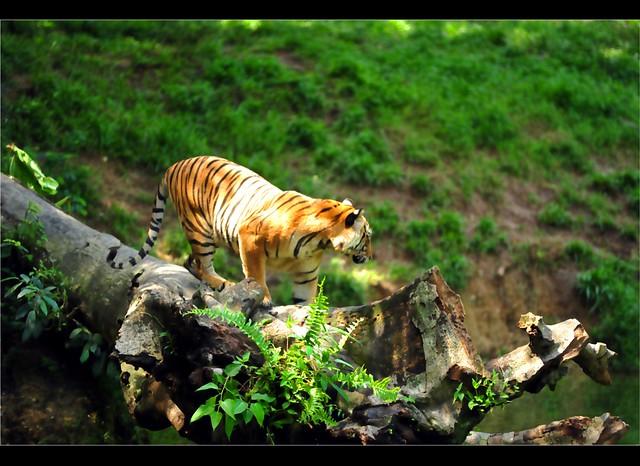 Zoo Taiping 43