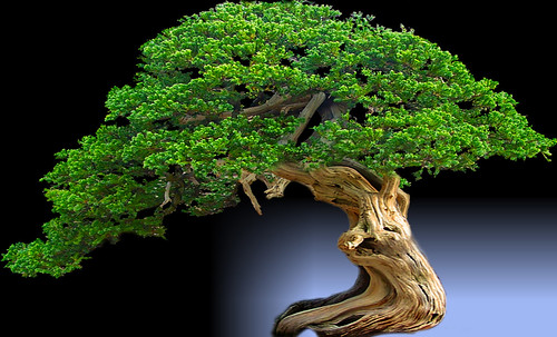 """Bonsai039 • <a style=""""font-size:0.8em;"""" href=""""http://www.flickr.com/photos/30735181@N00/5261339109/"""" target=""""_blank"""">View on Flickr</a>"""