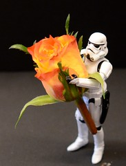 Flowers for Clones (Kalexanderson) Tags: friends two love rose big small clones stormtrooper broom jealousy clonetroopers 365daysofstormtroopers
