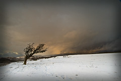Brynteg (i.m.j.) Tags: sunset snow wales clouds landscape cymru wideangle isolated lonelytree anglesey ynysmn tirlun efs1022mm13545usm canon7d