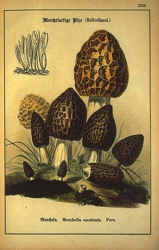 001-Allgemein verbreitete eßbare und schädliche Pilze 1876- Wilhelm von Ahles