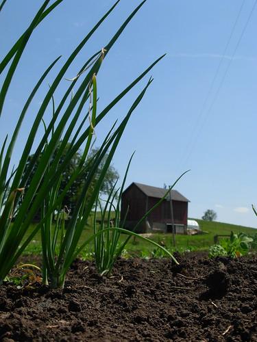 farm june 13 101