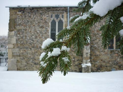 Snow/pine