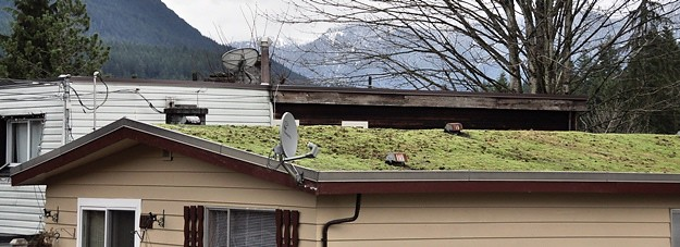 Mossy roof crop